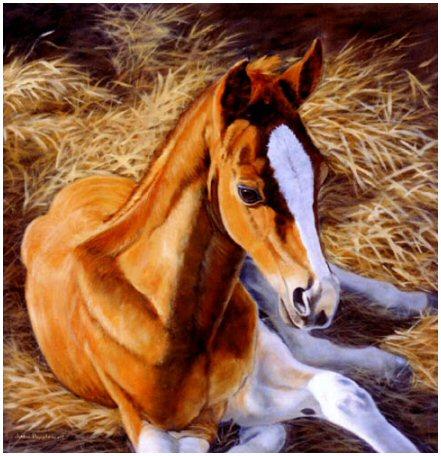 Foal in the Manger