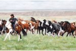 Roundup at the Calgary Stampede Ranch